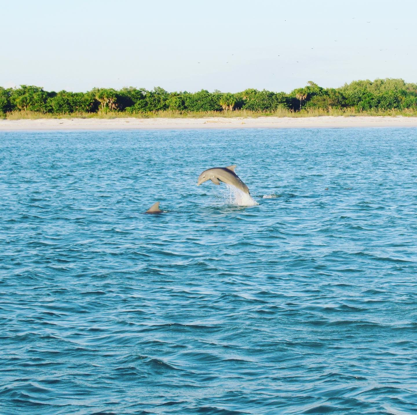 Dolphin spotted