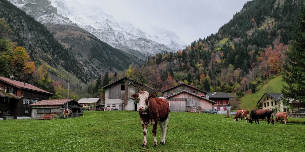 Discover Switzerland – from the sky into the forest hike