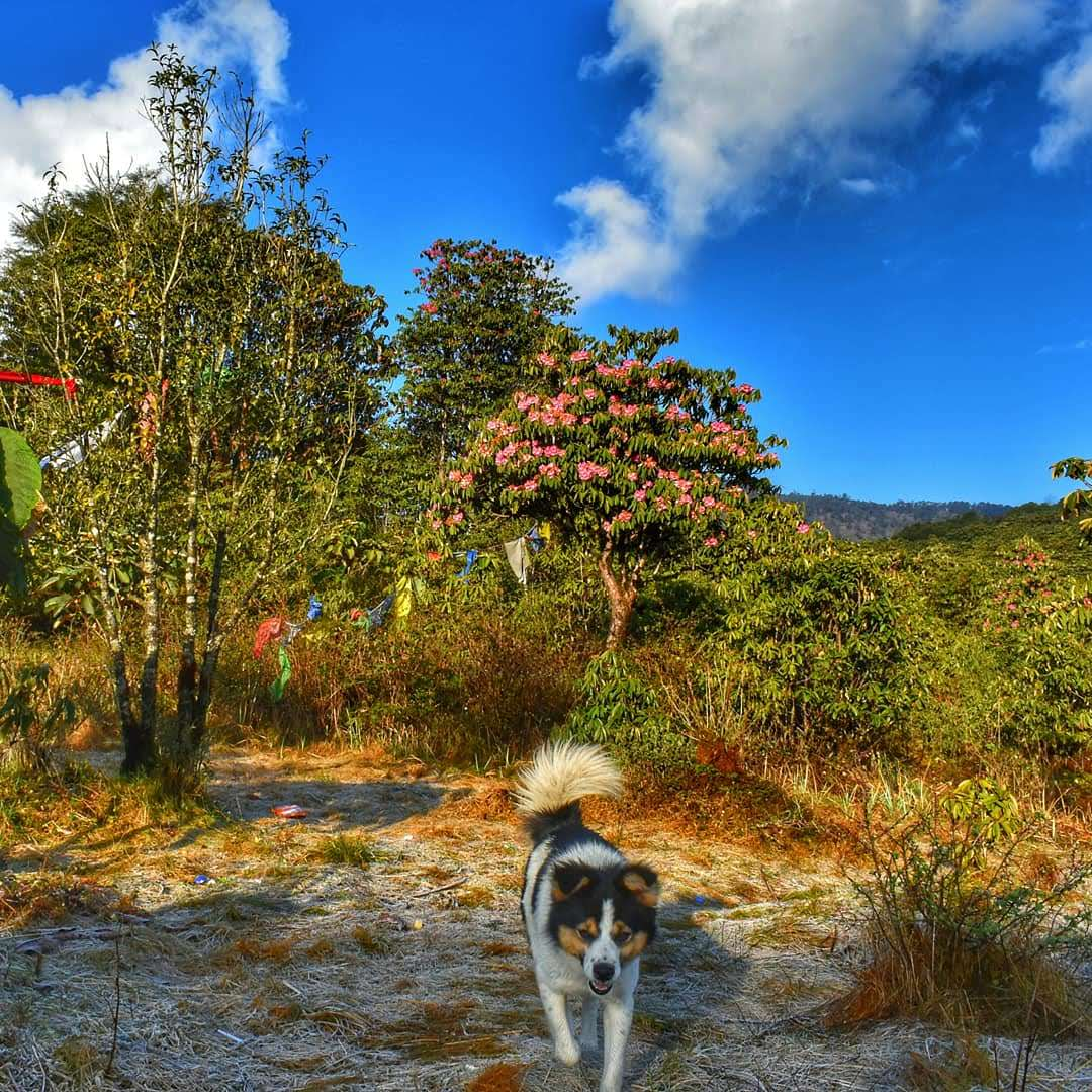 A plethora of experiences at a rhododendron sanctuary